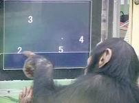 Qué monos son los números